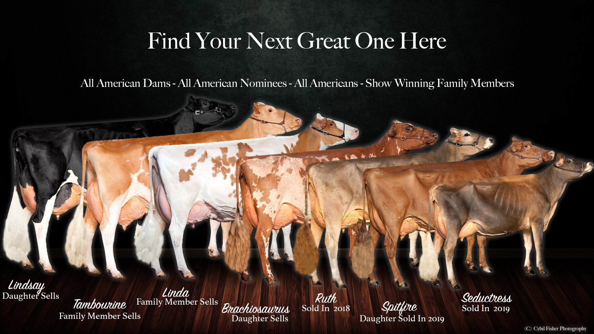 Find your next great one here - all american dams, all american nominees, all american show winning family members
